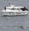 Whales_smh_20jun05